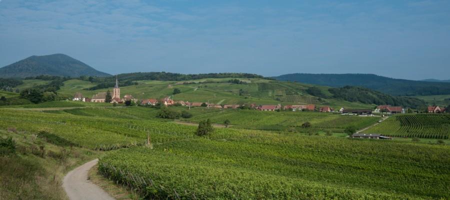 vignobles Alsace maison hauller