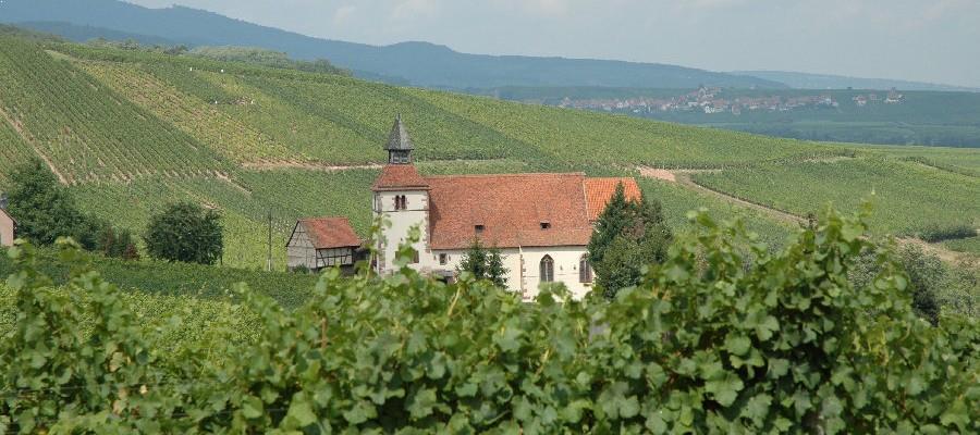 Le vignoble de la Maison Hauller en Alsace